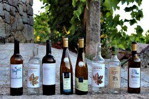 Vinhos de Lafões no Concurso de Vinhos de Portugal?